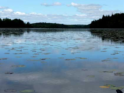 Seal Cove Pond water lilies