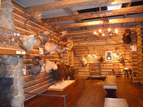 Trophy animals at Buffalo Bill Historical Center