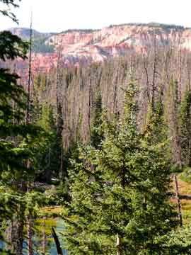 Cedar Breaks amphitheater seen through the woods.