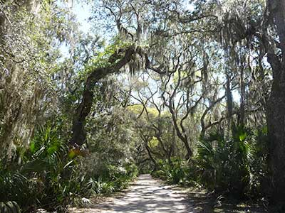 Tree covered walkway on Cumberland Island