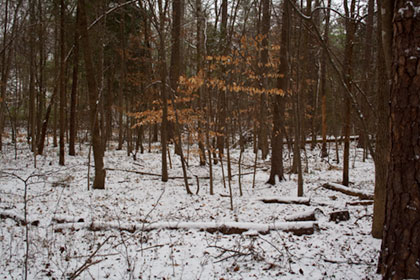 Woods along Crooked Run Creek in snow