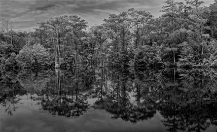 Black and white of trees reflected in Brock Millpond, Trenton, NC