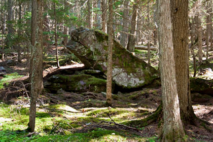 Large rock along trail of cedars