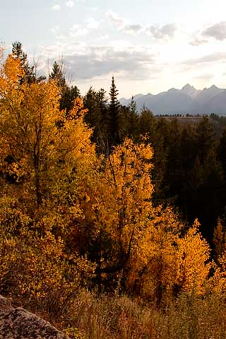 Fall colors in Grand Tetons