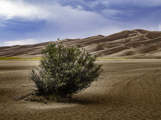 Great Sand Dunes with bush in foreground