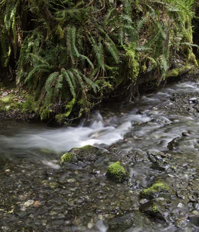 Madison Creek in Olympic National Park