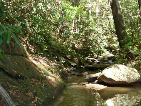 Small stream entering Lake Yonah