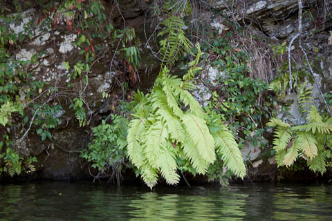 Ferns and rocks Lake Yonah