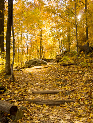 Along the South River Falls Trail. Path and golden leaves