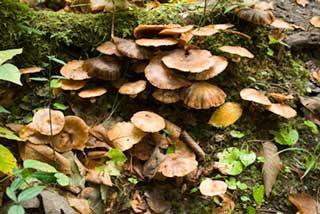Mushrooms and leaves